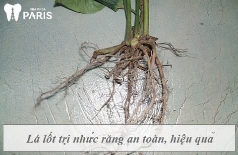 Cách chữa đau răng bằng rễ lá lốt