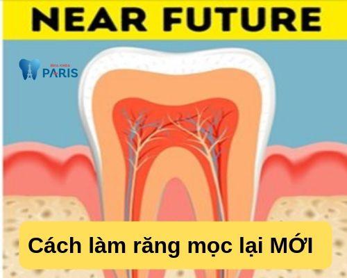 Cách làm răng mọc lại bằng tế bào gốc