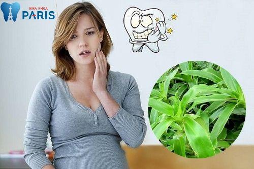 Mẹo chữa sâu răng bằng cây lược vàng