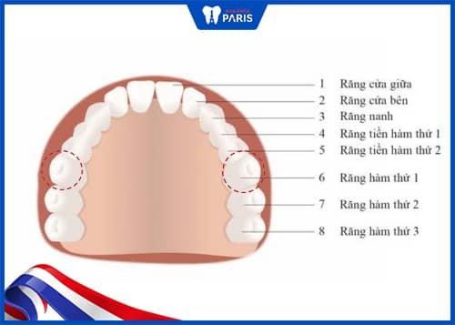 răng cấm là răng gì