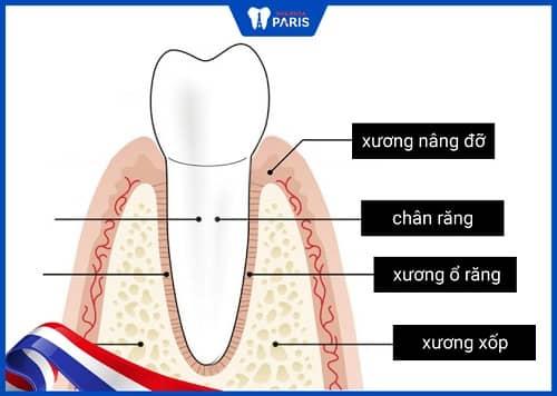 xương ổ răng nằm ở đâu