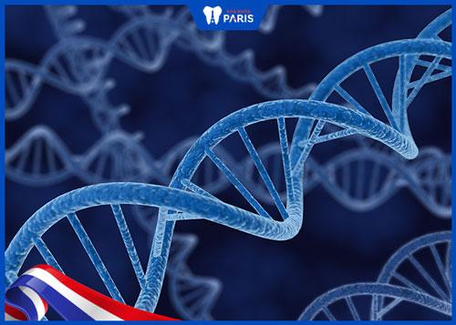 khớp cắn chéo do di truyền