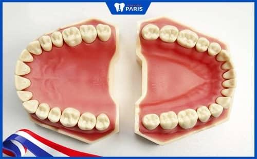 người trưởng thành có bao nhiêu cái răng